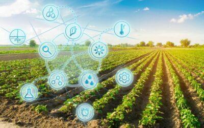 Marco Legal das Startups e o Agronegócio: o que é necessário saber